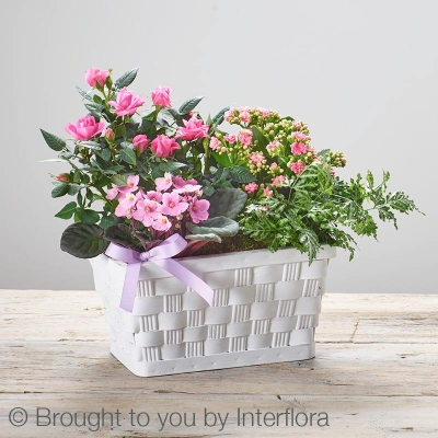 Mothers Day Mixed Planted Basket